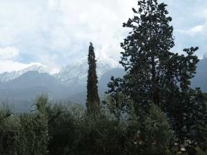 Маслиновите горички и кипарисите не се плашат от заснежените планини