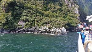 Нова Зеландия. Тюлени
