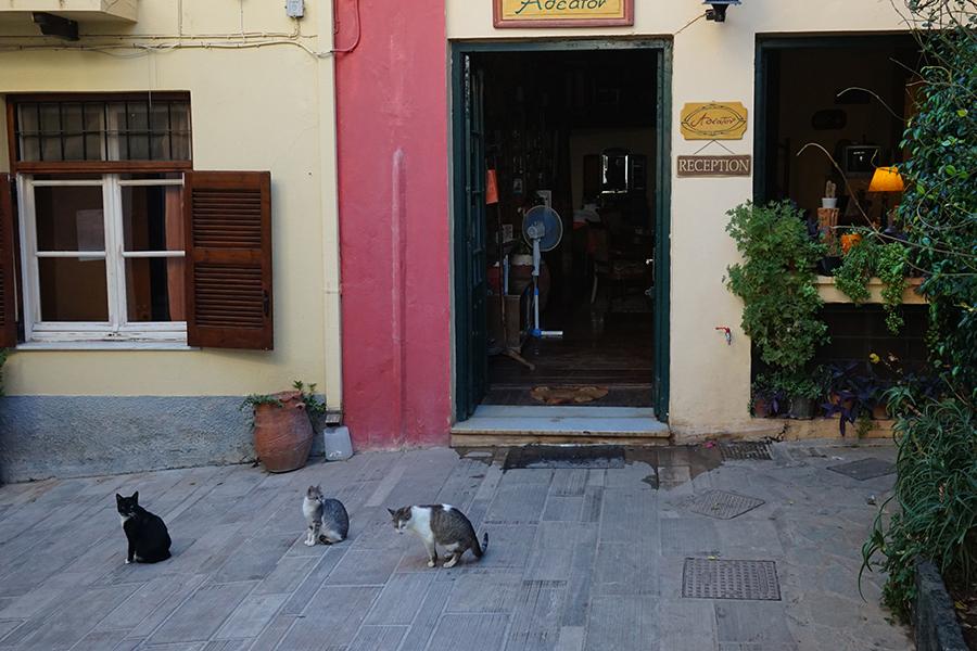 Котките са повсеместни