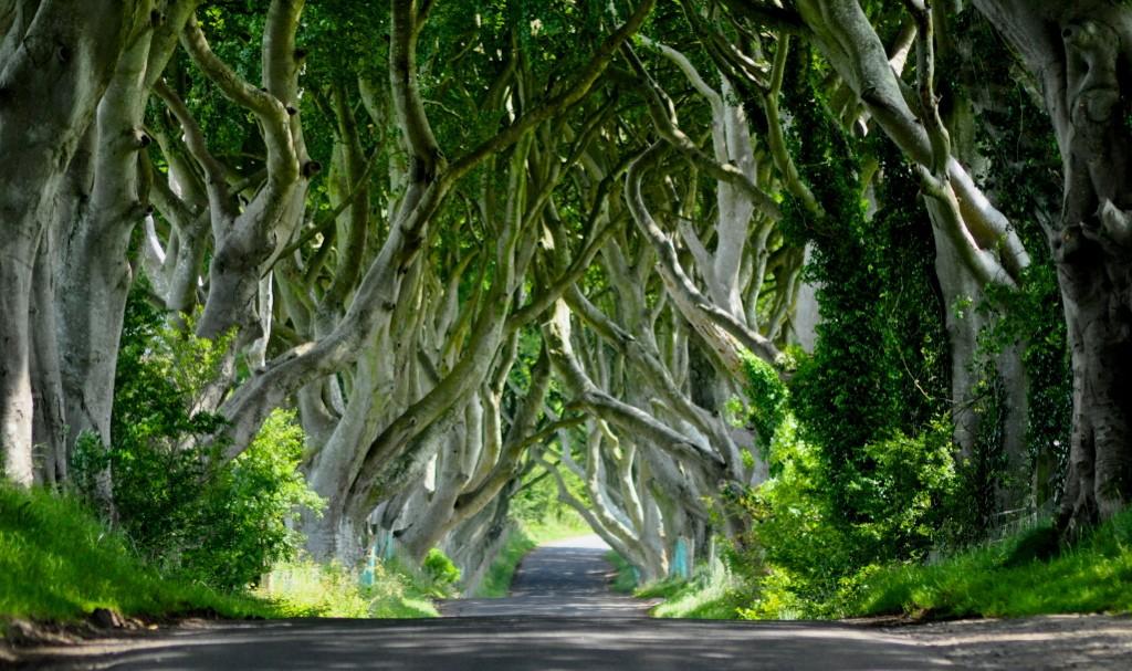 The Dark Hedges, Ирландия
