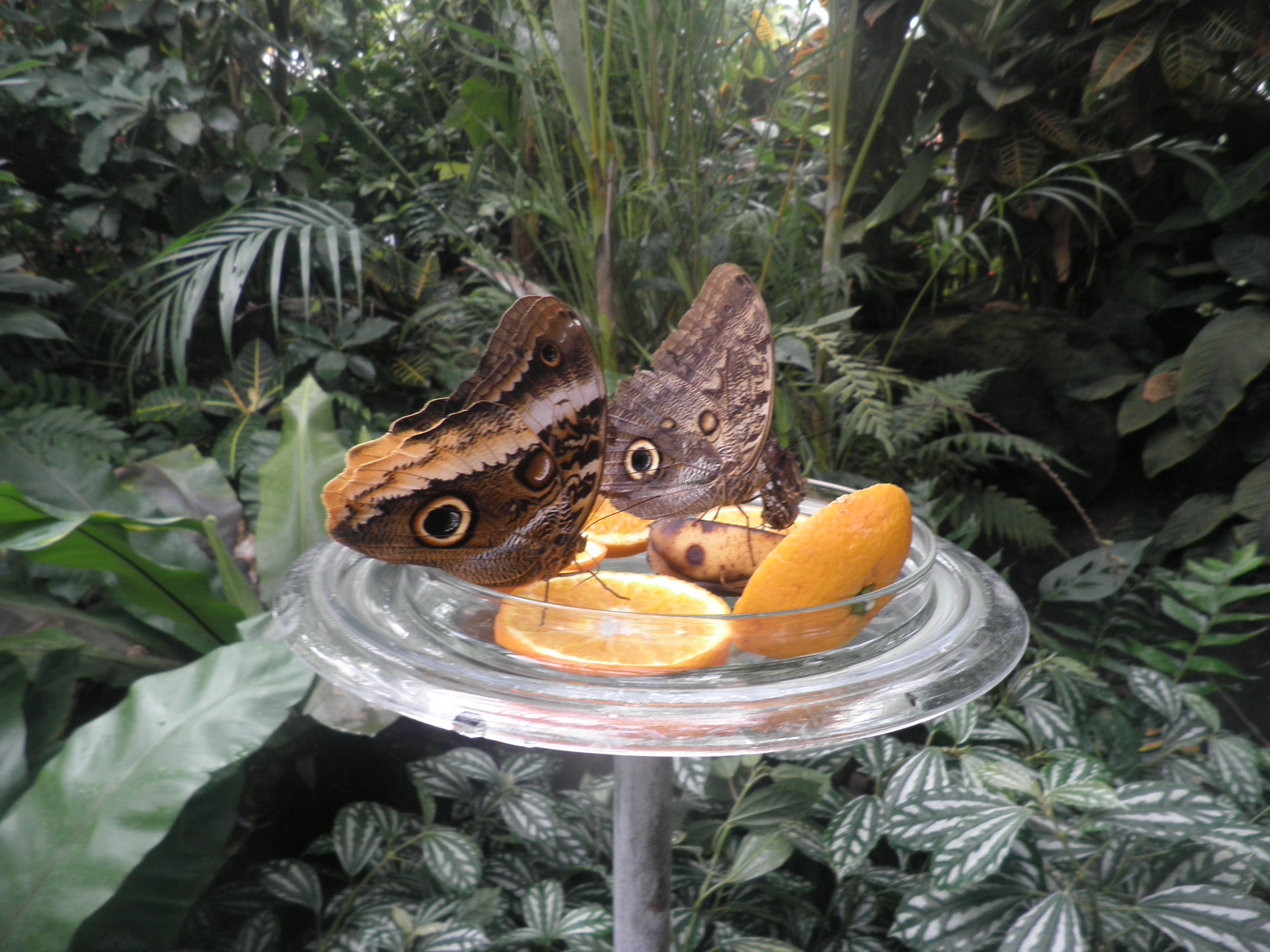 """В """"къщата на пеперудите"""" ще видите много такива подобни гледки, дори и върху самите вас."""