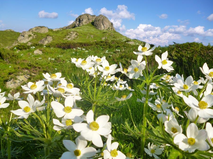 Цветя, Марагидик